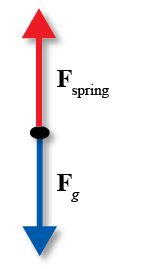 Simple Harmonic Motion – Concepts